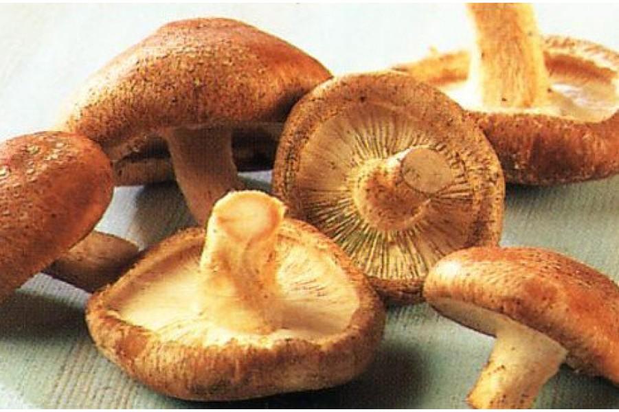 Nấm hương rừng, tác dụng của nấm hương rừng sapa